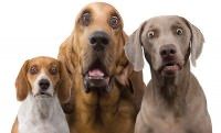 dogs surprised