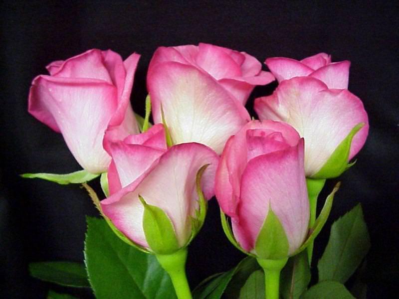 вдохнет имя фото цветы для александры сей