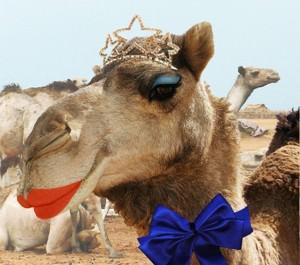 camel tiara