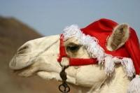 camel santa hat