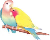 lovebirds 2
