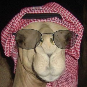 camel 26