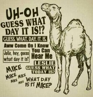 camel hump day 5
