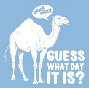 camel humpday