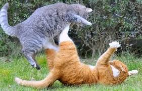 cat fight 3