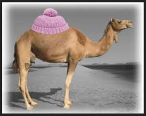 camel 34