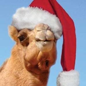 camel santa hat 2
