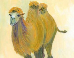 camel 37