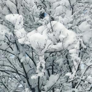 camel snow 3