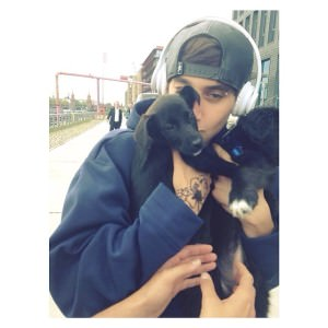 jai brooks puppies