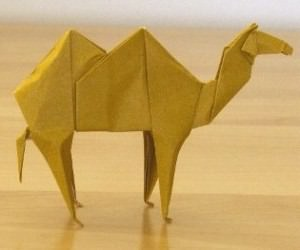 camel 43