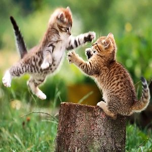 cat fight 4