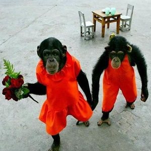 monkey couple 1