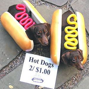 dog hot dog