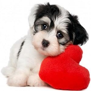 puppy-10